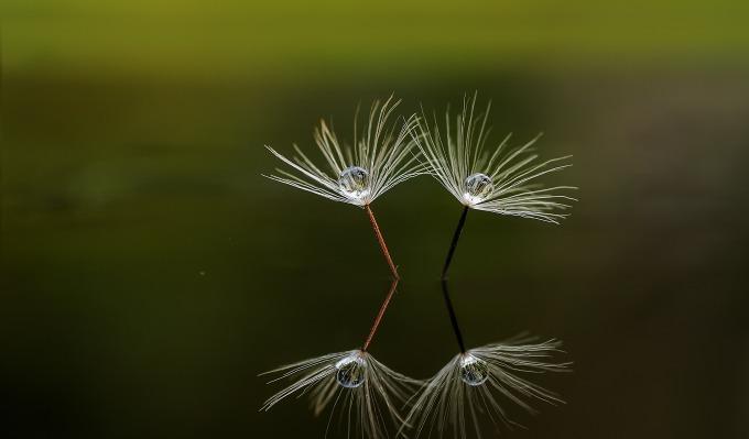 macro-nature-reflection-beautiful-57434