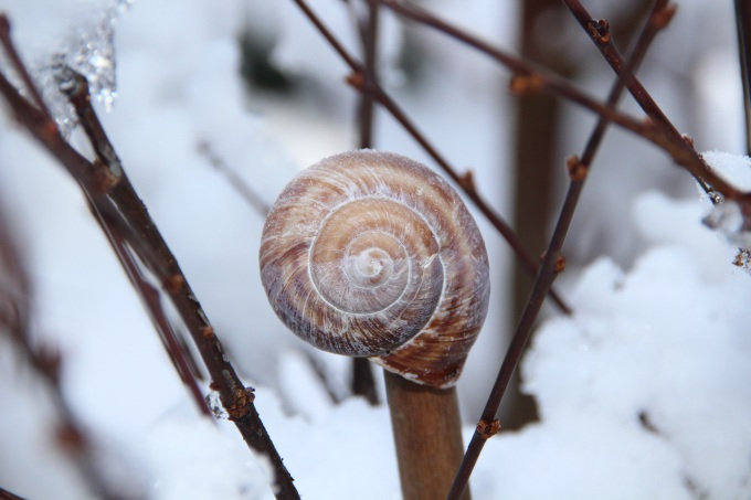 winter-rod-snow-ice-39249